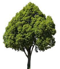 В Саратове на автомобиль упало дерево